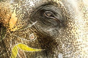 Jaipur, Rajasthan, India. Painted Elephant and one eye at Amber Fort by Jolly Sienda