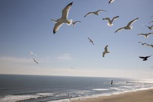 Virginia Beach, Virginia. Flock of Seagulls Fly over a Beach by Jolly Sienda