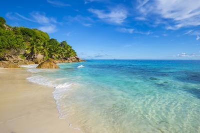 Palm Trees and Tropical Beach, La Digue, Seychelles by Jon Arnold