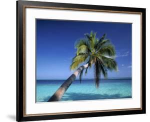 Tropical Beach at Maldives by Jon Arnold