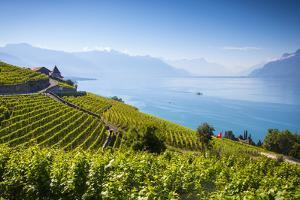 Vineyards Above Vevey, Lake Geneva, Vaud, Switzerland by Jon Arnold