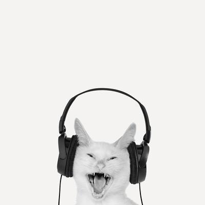 Rockin' Kitten