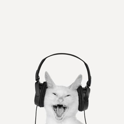 Rockin' Kitten by Jon Bertelli