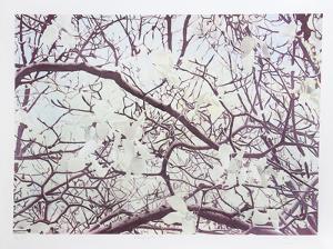 Magnolia IV by Jon D'Orazio