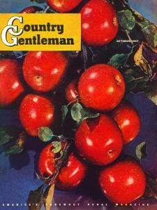 """Ripe Red Apples,"" Country Gentleman Cover, October 1, 1947 by Jon Fujita"