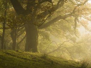 Early morning sunlight on the autumnal trees at Park Brow, Cumbria, England, United Kingdom, Europe by Jon Gibbs