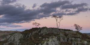 Skeletal trees atop crags at twilight at Holme Fell, Lake District National Park, Cumbria, England, by Jon Gibbs
