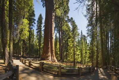General Sherman in Sequoia National Park.