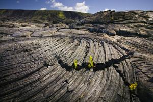 Seedlings Sprouting in Lava Field by Jon Hicks