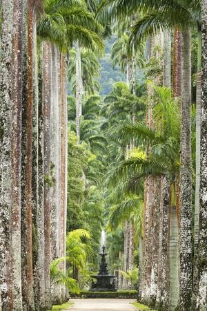 The Avenue of Royal Palms, Rio De Janeiro Botanical Garden.