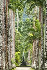 The Avenue of Royal Palms, Rio De Janeiro Botanical Garden. by Jon Hicks