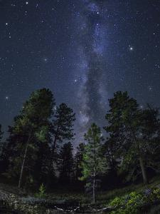 Woods in Bryce Canyon National Park at Night by Jon Hicks