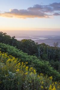 Golden rods and sunrise over the Blue Ridge Mountains, North Carolina, United States of America, No by Jon Reaves