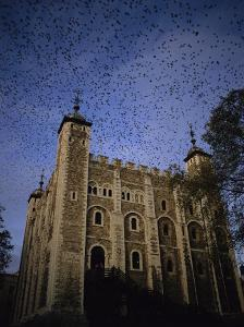 A Flock of Starlings in Flight over the Tower of Londons White Tower by Jonathan Blair