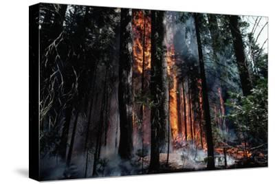 Fire in Forest Lit by Rangers