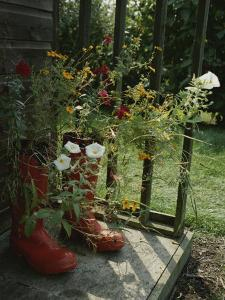 Flowers Bloom from an Unlikely Place-A Pair of Red Boots on a Porch by Jonathan Blair
