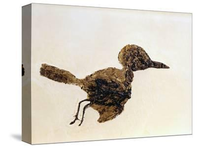 Fossil of Small Bird from Messel Site