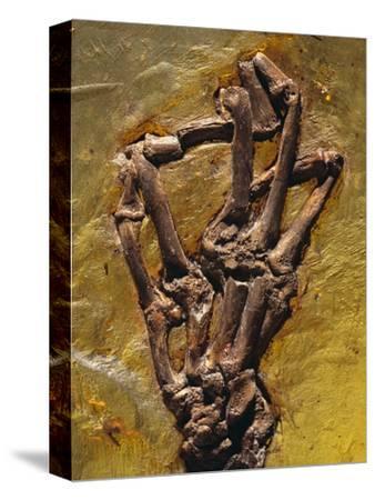 Monkey Hand Fossil