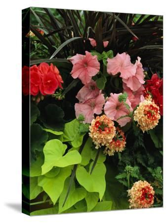 Petunias and Other Wholesale Flowers are on Display For Buyers