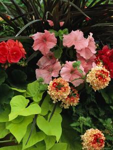 Petunias and Other Wholesale Flowers are on Display For Buyers by Jonathan Blair