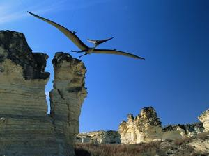 Pteranodon Longiceps in Flight by Jonathan Blair