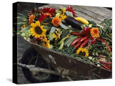 Sunflowers, Dahlias, Eggplants, Pepper and Squash Fill a Wheelbarrow