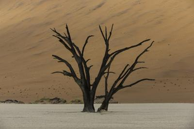 A Surreal Landscape of Dead Trees in a Clay Pan and Large Sand Dunes by Jonathan Irish
