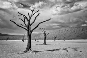 A Surreal Landscape of Dead Trees in a Clay Pan and Sand Dunes under a Cloud Filled Sky by Jonathan Irish
