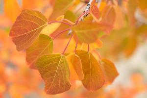 Fall foliage in Kobuk Valley National Park. by Jonathan Irish