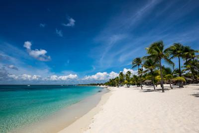 Palm Trees and Clean Beaches on the Caribbean Sea by Jonathan Irish