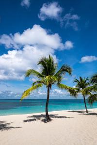 Palm Trees and their Shadows on a Pristine Caribbean Sea Beach by Jonathan Irish