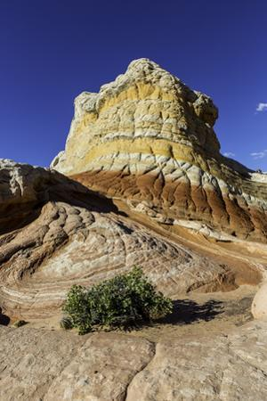 Sandstone Formations in White Pocket at Grand Staircase Escalante National Monument by Jonathan Irish