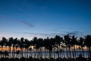 Silhouetted Palm Trees and the Calm Caribbean Sea Beyond at Sunset by Jonathan Irish