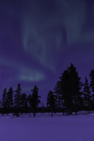 The Northern Lights or Aurora Borealis over Silhouetted Evergreen Trees in a Snowy Landscape by Jonathan Irish