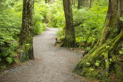 A Graveled Path Through the Woods of the Temperate Rainforest in Sitka, Alaska