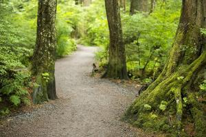 A Graveled Path Through the Woods of the Temperate Rainforest in Sitka, Alaska by Jonathan Kingston