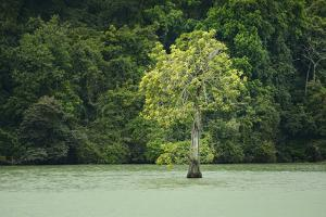 A Strangler Fig Grows on the Chassis of a Dead Tree by Jonathan Kingston