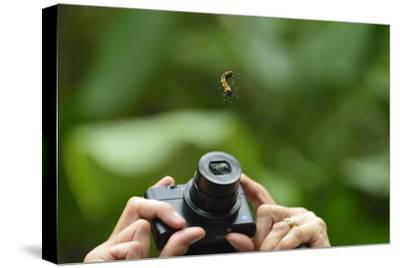 A Tourist Takes a Photograph of a Caterpillar Hanging from a Thread of Silk