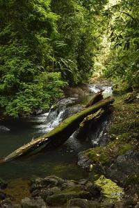 Beautiful Swimming Hole on the Pargo River, Corcovado National Park by Jonathan Kingston