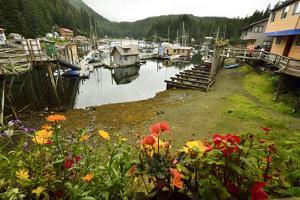 Flowers Frame the Harbor in Elfin Cove, Alaska by Jonathan Kingston