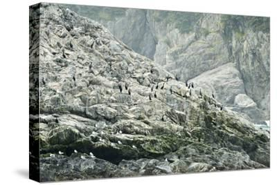 Pelagic Cormorants on the Rocky Shore of the Inian Islands