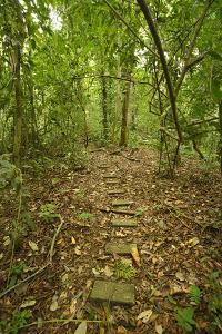 Research Trail Through the Tropical Forest of Barro Colorado Island by Jonathan Kingston