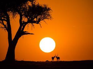 African Sunset by Jonathan Zhang