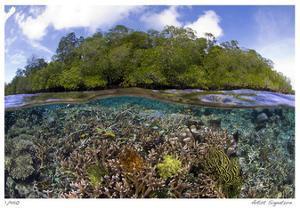 Blue Water Mangroves by Jones-Shimlock