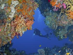 Diver Inspects Reef, Raja Ampat, Papua, Indonesia by Jones-Shimlock