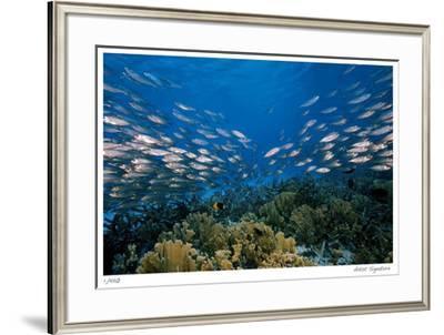 Reef Scenic 1