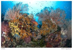 Reef Scenic 4 by Jones-Shimlock