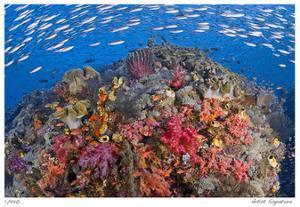 Reef Scenic 6 by Jones-Shimlock
