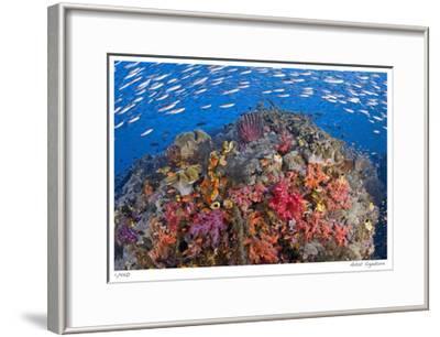 Reef Scenic 6