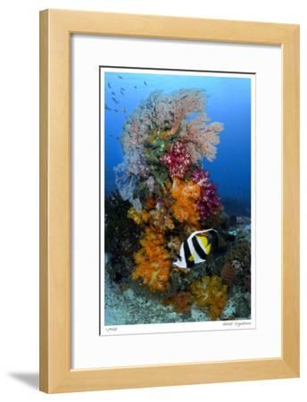 Reef Scenic 7